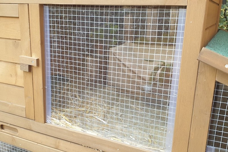 Windscherm konijnenhok met konijnen