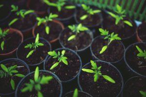 Leuke tuinideeen maak je eigen tuinkas