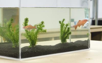 Zelf een aquarium maken van plexiglas