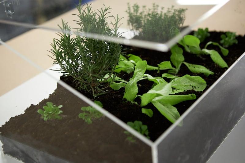 Kweekbak maken eindresultaat met plantjes van dichtbij