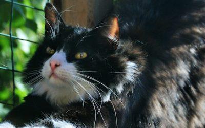 Kattenren maken in je tuin met polycarbonaat