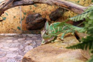 Dierenverblijf op maat voor reptielen