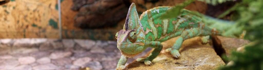 Terrarium gekko groen
