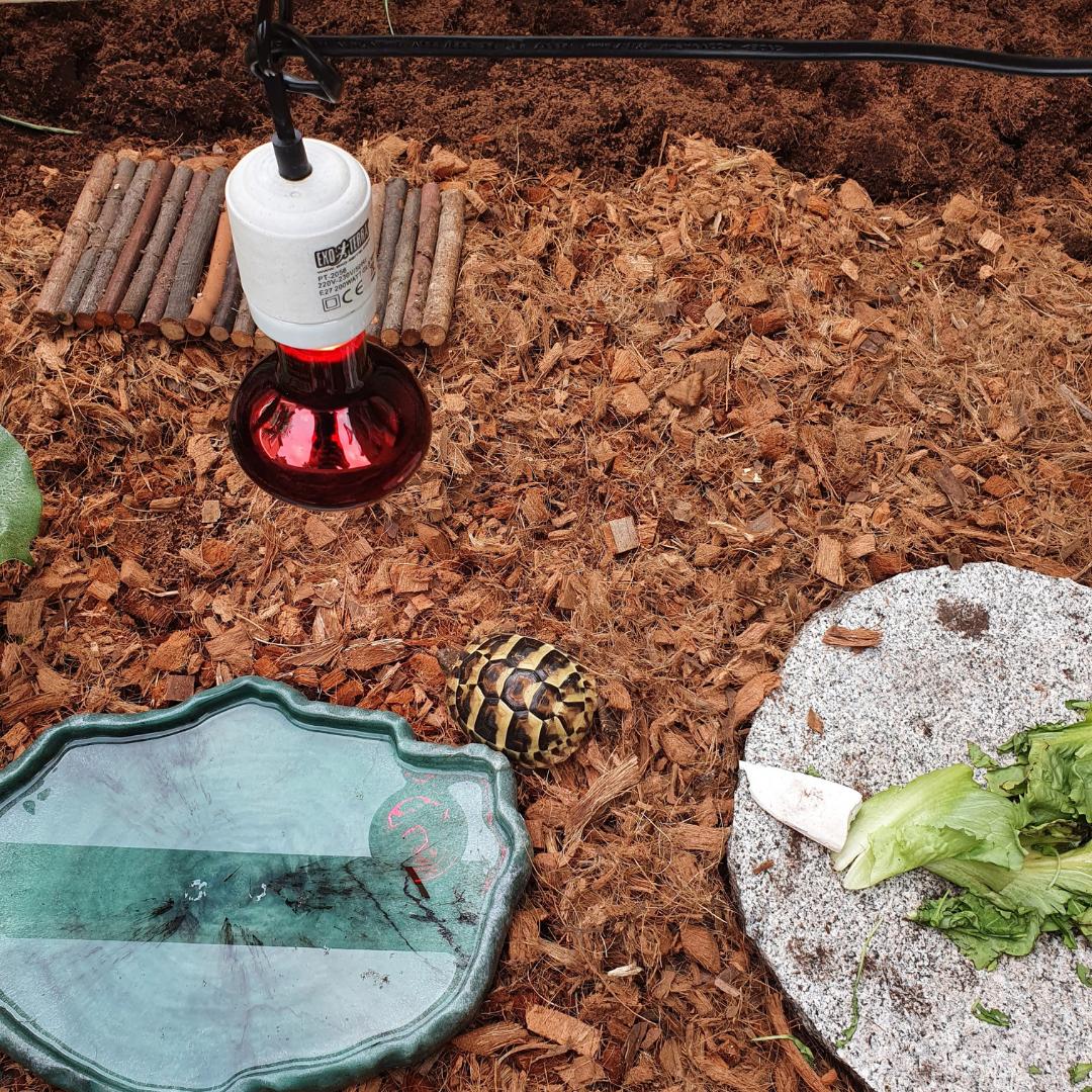 Buitenverblijf schildpadden van plexiglas