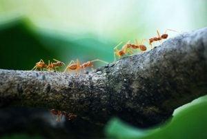 Mierenboederij maken