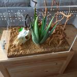 Vogelspinnenverblijf van plexiglas eindresultaat